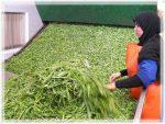 طرح توجیهی بسته بندی انواع سبزی خشک شده