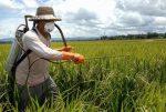 طرح توجیهی تولید مواد موثره سموم دفع آفات نباتی